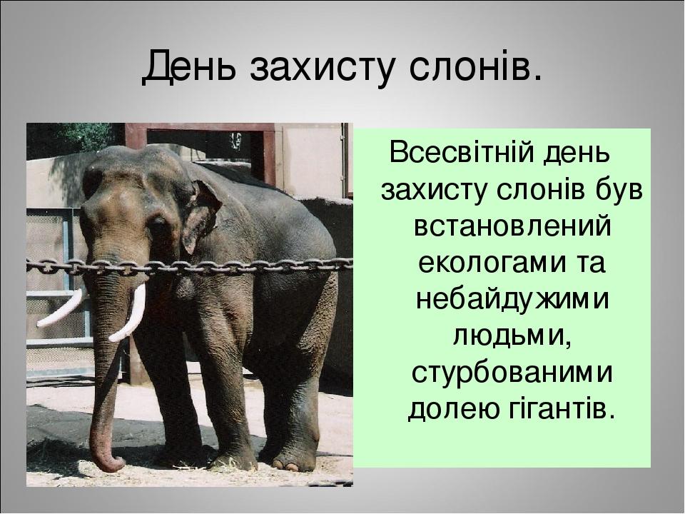 День захисту слонів. Всесвітній день захисту слонів був встановлений екологами та небайдужими людьми, стурбованими долею гігантів.