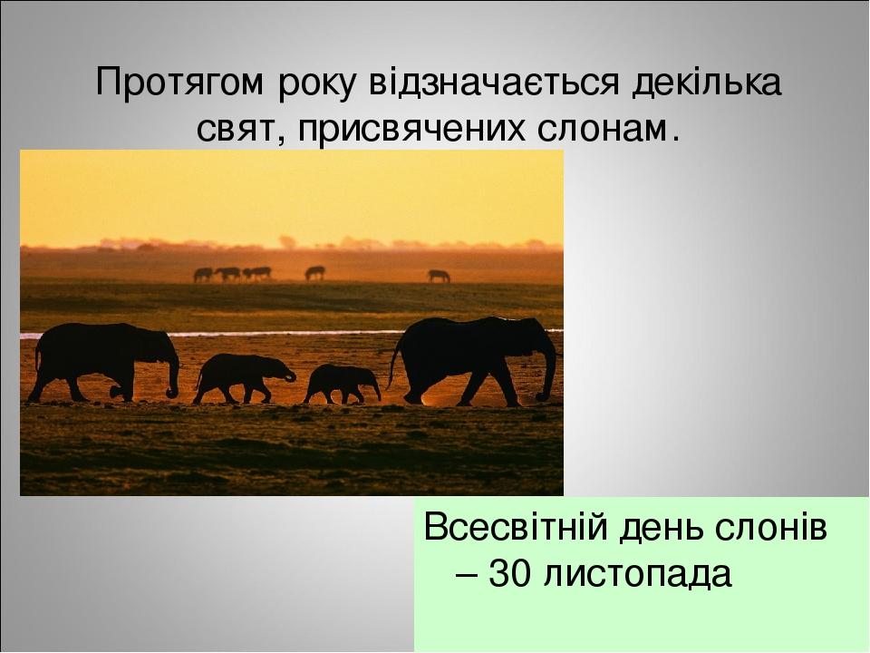Протягом року відзначається декілька свят, присвячених слонам. Всесвітній день слонів – 30 листопада