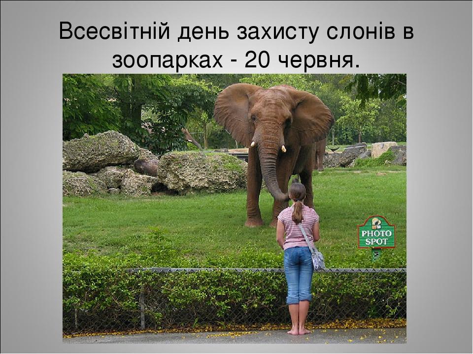 Всесвітній день захисту слонів в зоопарках - 20 червня.