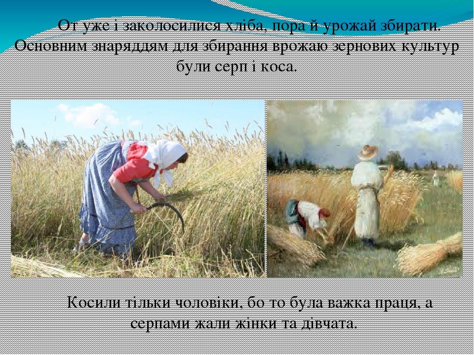 От уже і заколосилися хліба, пора й урожай збирати. Основним знаряддям для збирання врожаю зернових культур були серп і коса. Косили тільки чоловік...