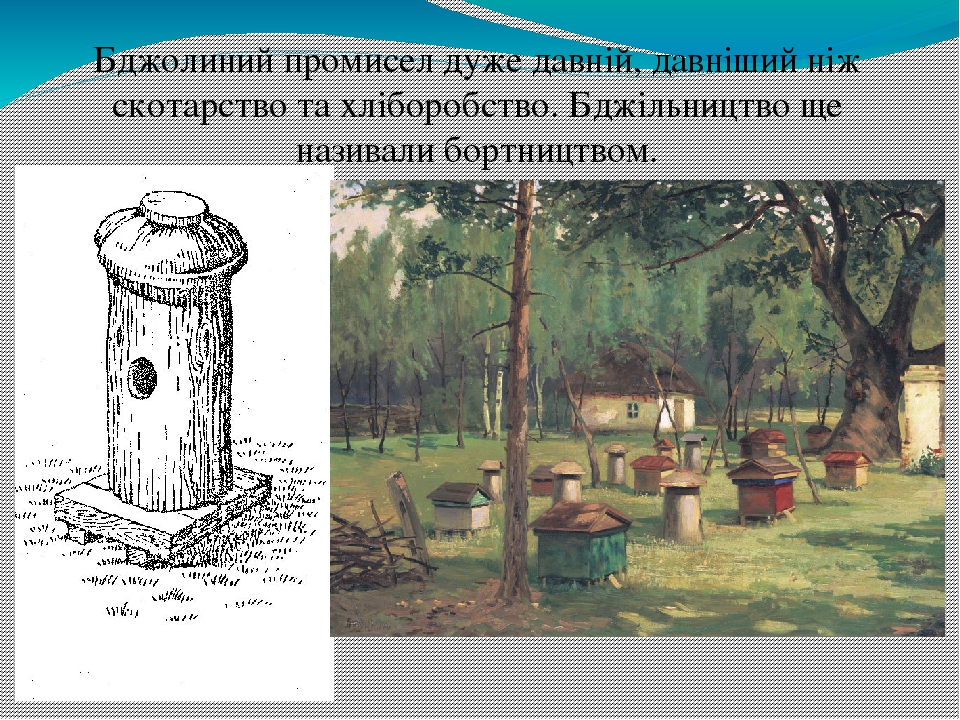 Бджолиний промисел дуже давній, давніший ніж скотарство та хліборобство. Бджільництво ще називали бортництвом.