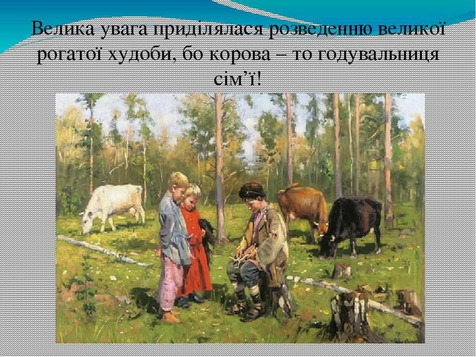 Велика увага приділялася розведенню великої рогатої худоби, бо корова – то годувальниця сім'ї!