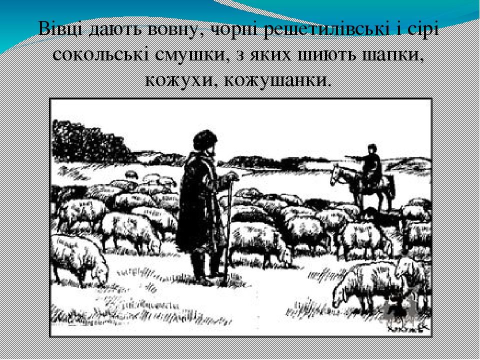 Вівці дають вовну, чорні решетилівські і сірі сокольські смушки, з яких шиють шапки, кожухи, кожушанки.