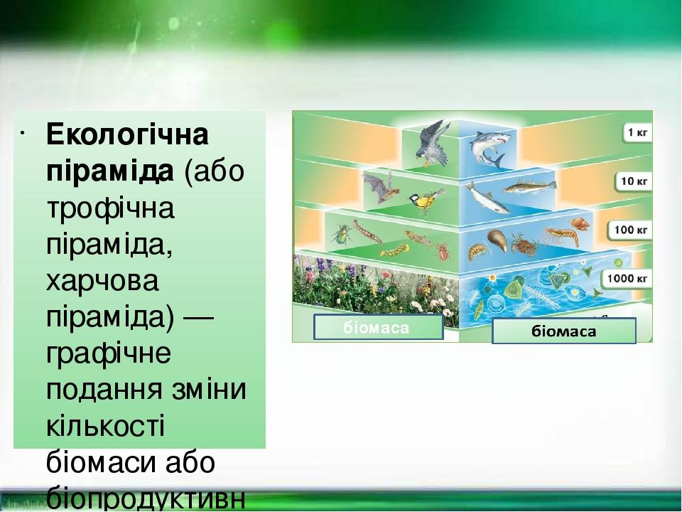 Екологі́чна пірамі́да (або трофічна піраміда, харчова піраміда) — графічне подання зміни кількості біомаси або біопродуктивності на кожному трофічн...