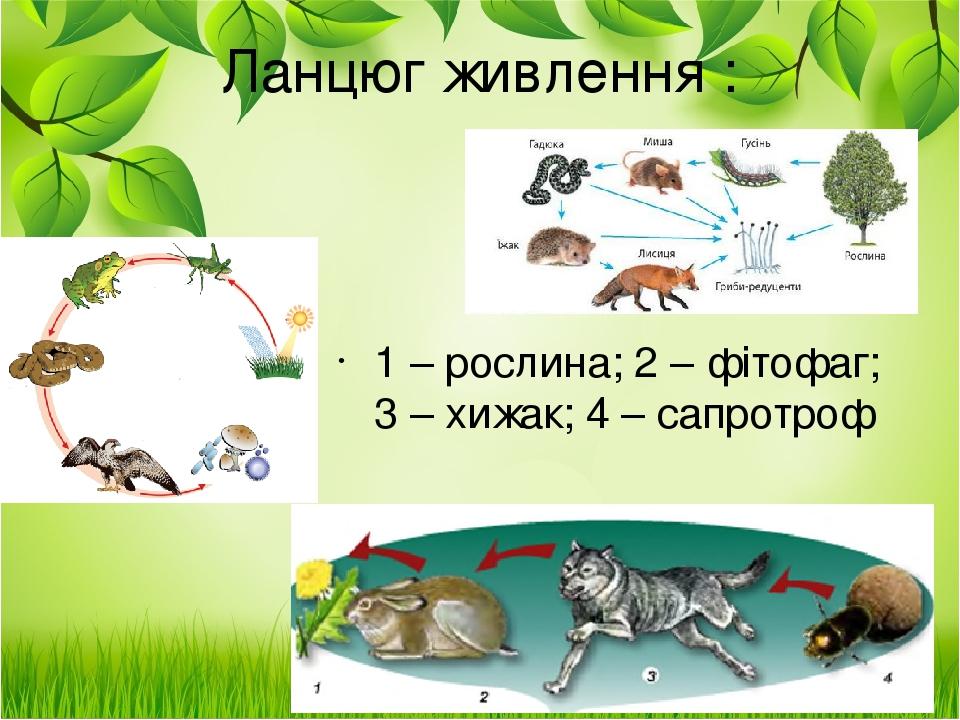 1 – рослина; 2 – фітофаг; 3 – хижак; 4 – сапротроф Ланцюг живлення :