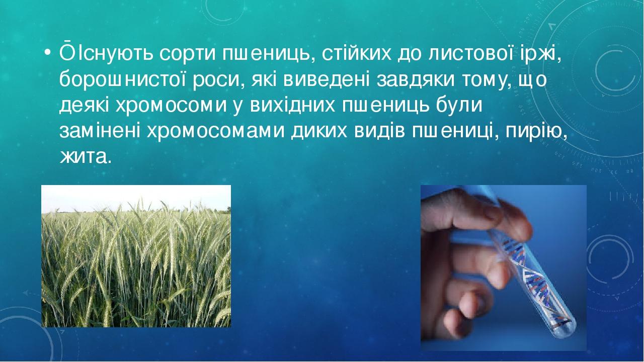 ■ Існують сорти пшениць, стійких до листової іржі, борошнистої роси, які виведені завдяки тому, що деякі хромосоми у вихідних пшениць були замінені...