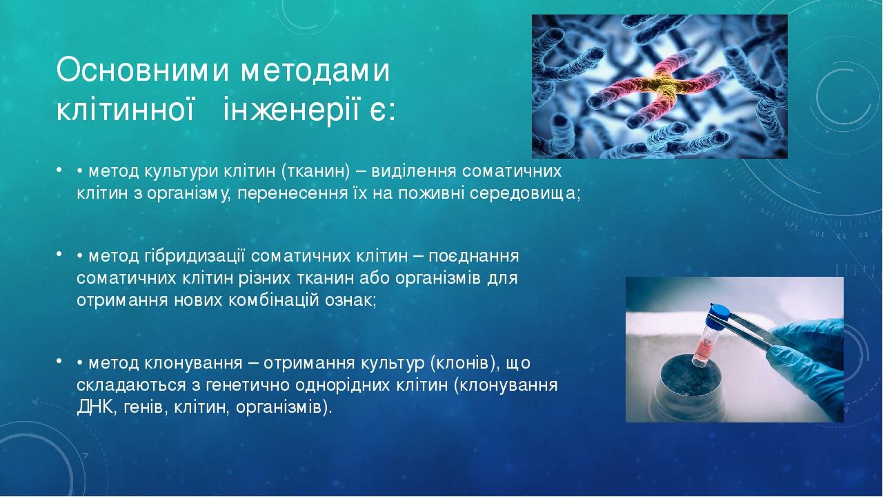 Основними методами клітинної інженерії є: • метод культури клітин (тканин) – виділення соматичних клітин з організму, перенесення їх на поживні сер...