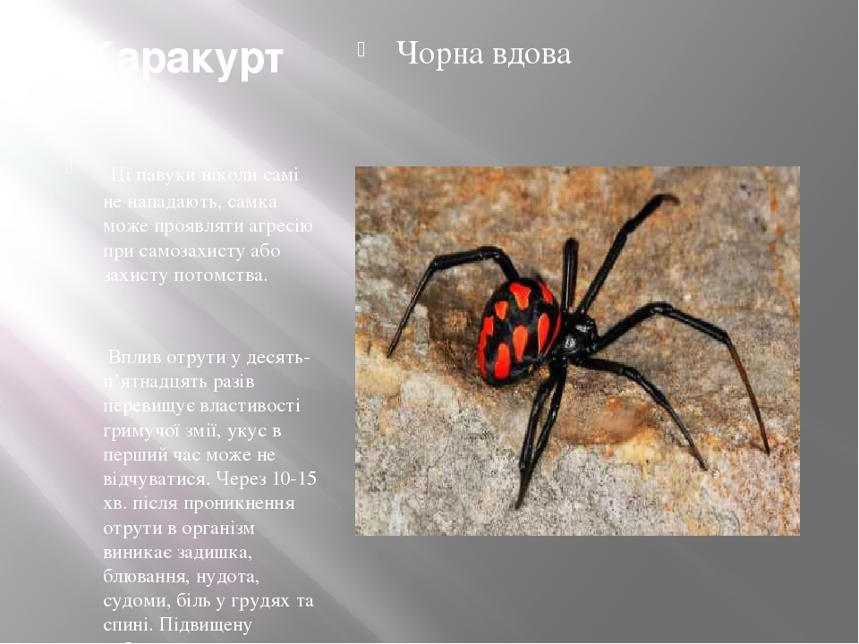 Каракурт Ці павуки ніколи самі не нападають, самка може проявляти агресію при самозахисту або захисту потомства. Вплив отрути у десять-п'ятнадцять...