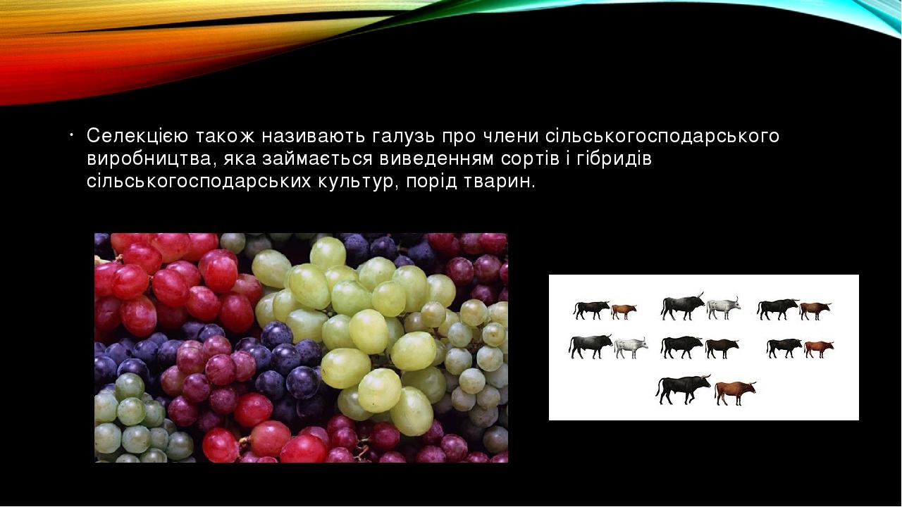 Селекцією також називають галузь про члени сільськогосподарського виробництва, яка займається виведенням сортів і гібридів сільськогосподарських ку...