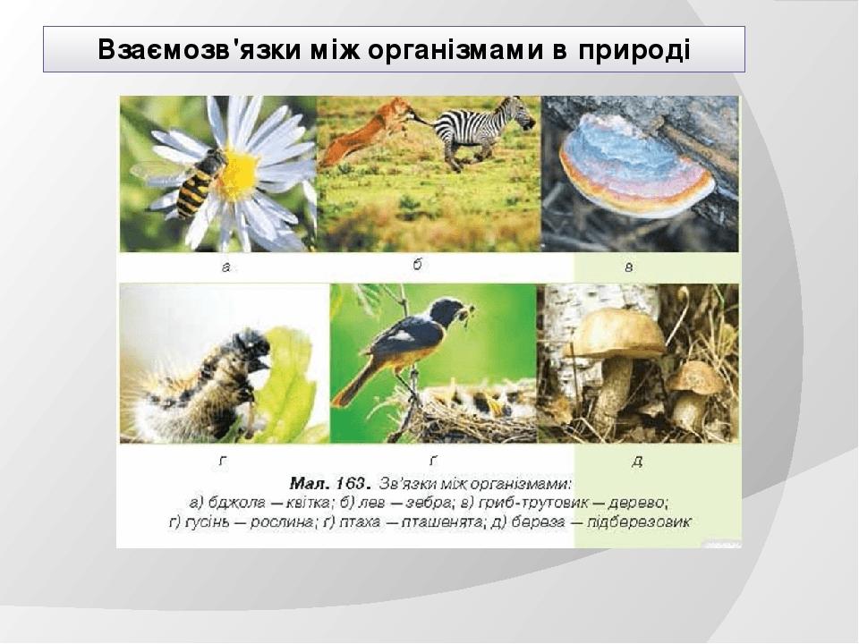 Взаємозв'язки між організмами в природі