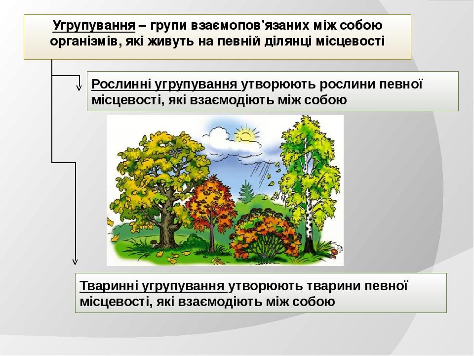 Угрупування – групи взаємопов'язаних між собою організмів, які живуть на певній ділянці місцевості Рослинні угрупування утворюють рослини певної мі...