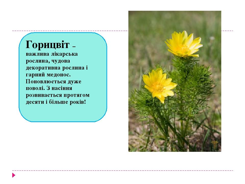 Горицвіт – важлива лікарська рослина, чудова декоративна рослина і гарний медонос. Поновлюється дуже поволі. З насіння розвивається протягом десяти...
