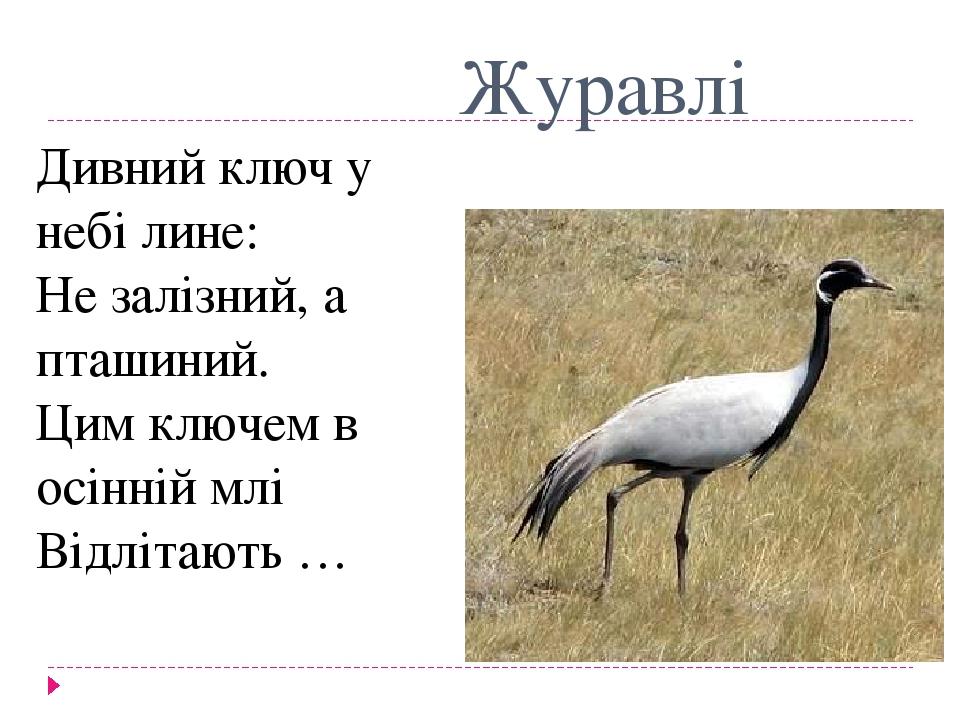 Журавлі Дивний ключ у небі лине: Не залізний, а пташиний. Цим ключем в осінній млі Відлітають …