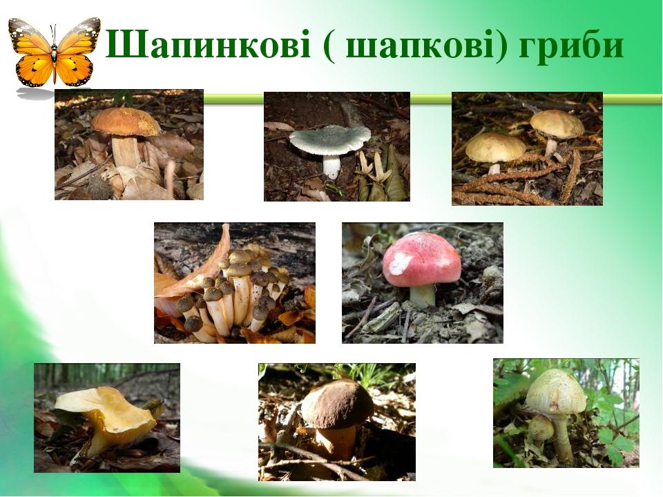 Шапинкові ( шапкові) гриби