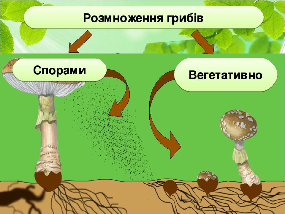 Вегетативно Спорами Розмноження грибів
