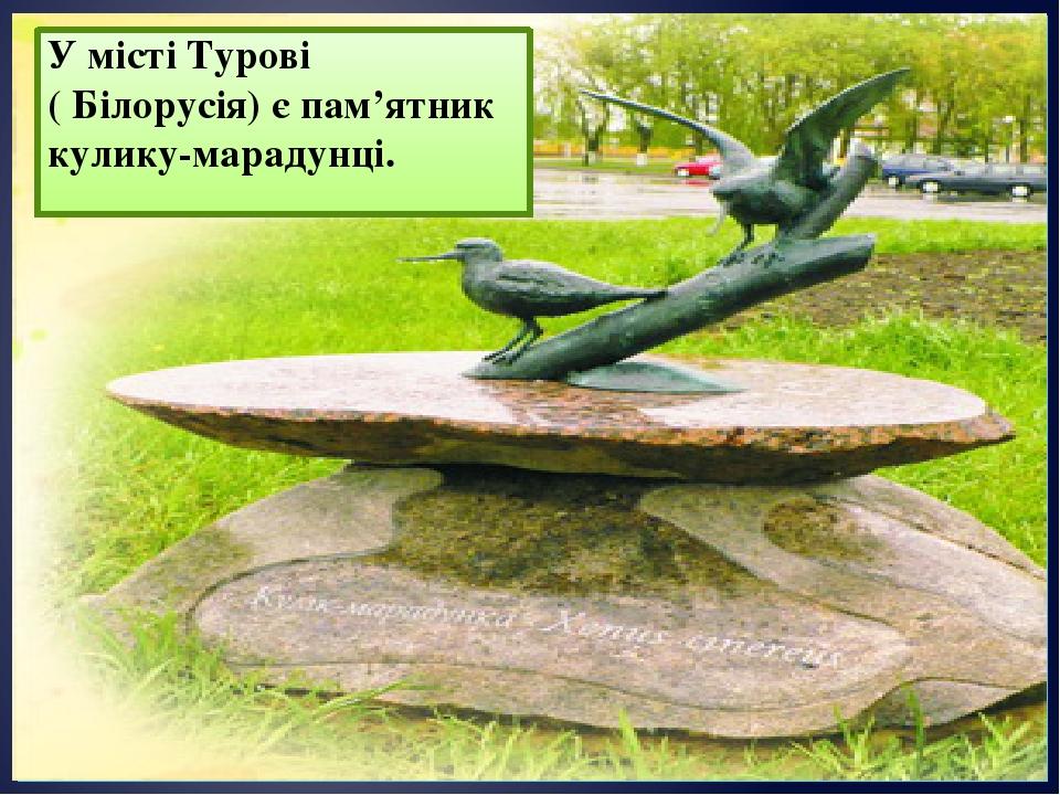 У місті Турові ( Білорусія) є пам'ятник кулику-марадунці.