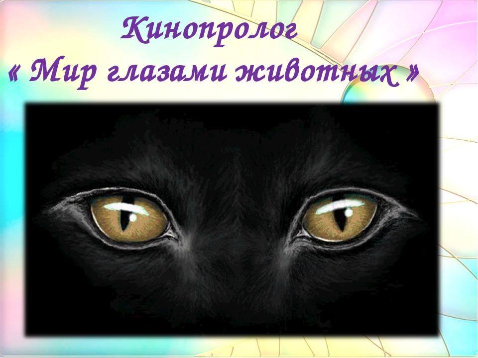 Кинопролог « Мир глазами животных »