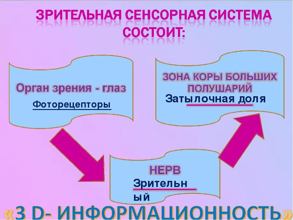 Фоторецепторы Зрительный Затылочная доля
