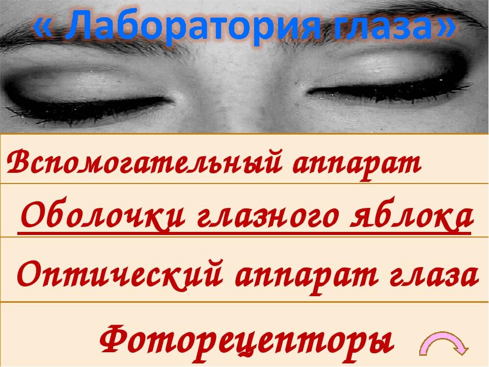 Оптический аппарат глаза Вспомогательный аппарат глаза Фоторецепторы Оболочки глазного яблока