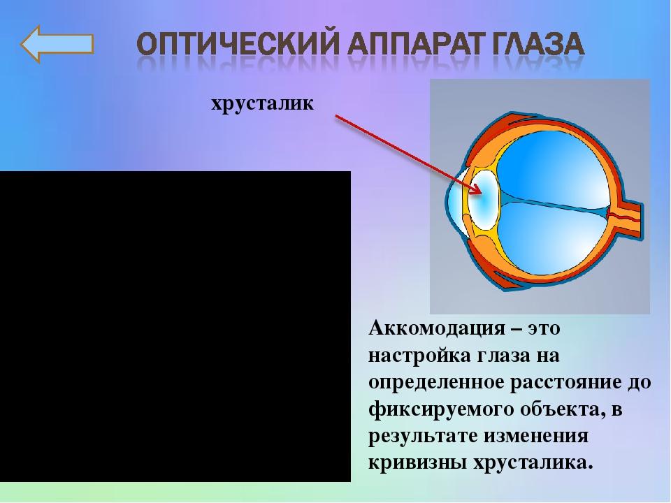 хрусталик Аккомодация – это настройка глаза на определенное расстояние до фиксируемого объекта, в результате изменения кривизны хрусталика.