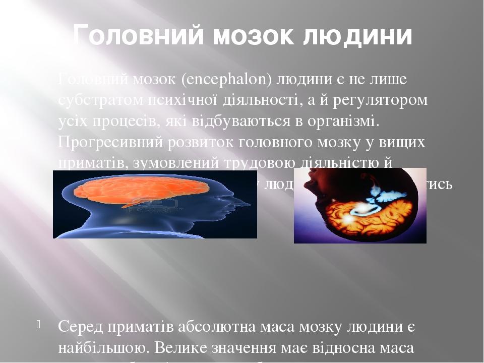 Головний мозок людини Головний мозок (еncephalon) людини є не лише субстратом психічної діяльності, а й регулятором усіх процесів, які відбуваються...