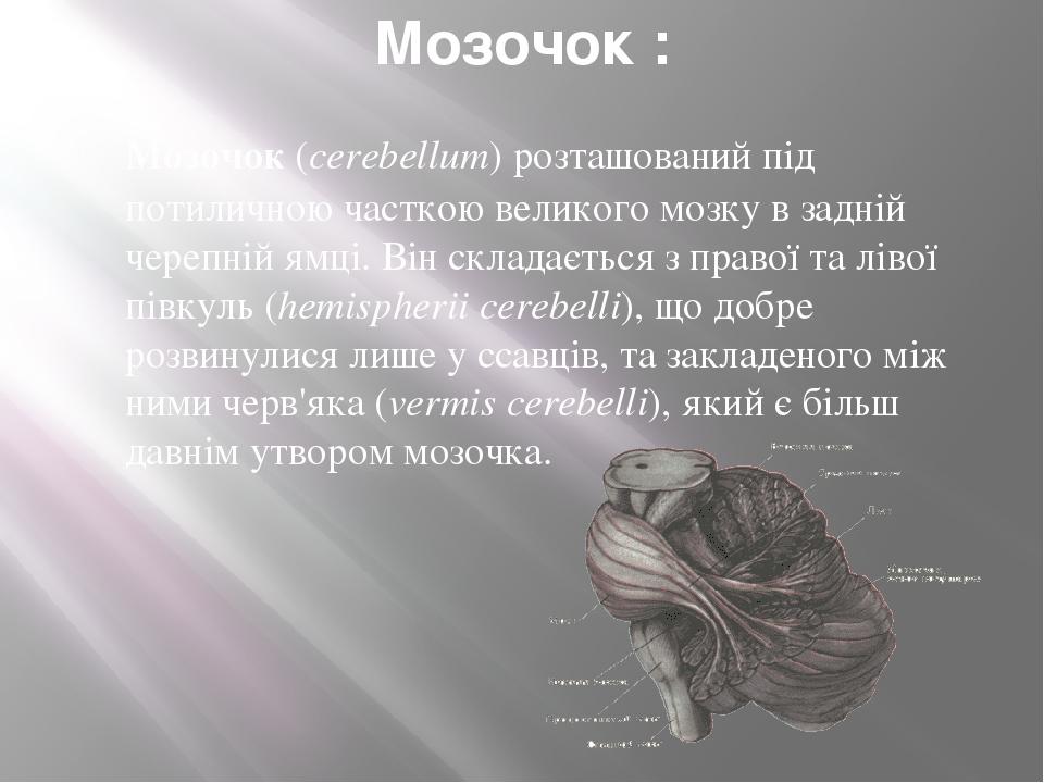 Мозочок : Мозочок(cerebellum) розташований під потиличною часткою великого мозку в задній черепній ямці. Він складається з правої та лівої півкуль...