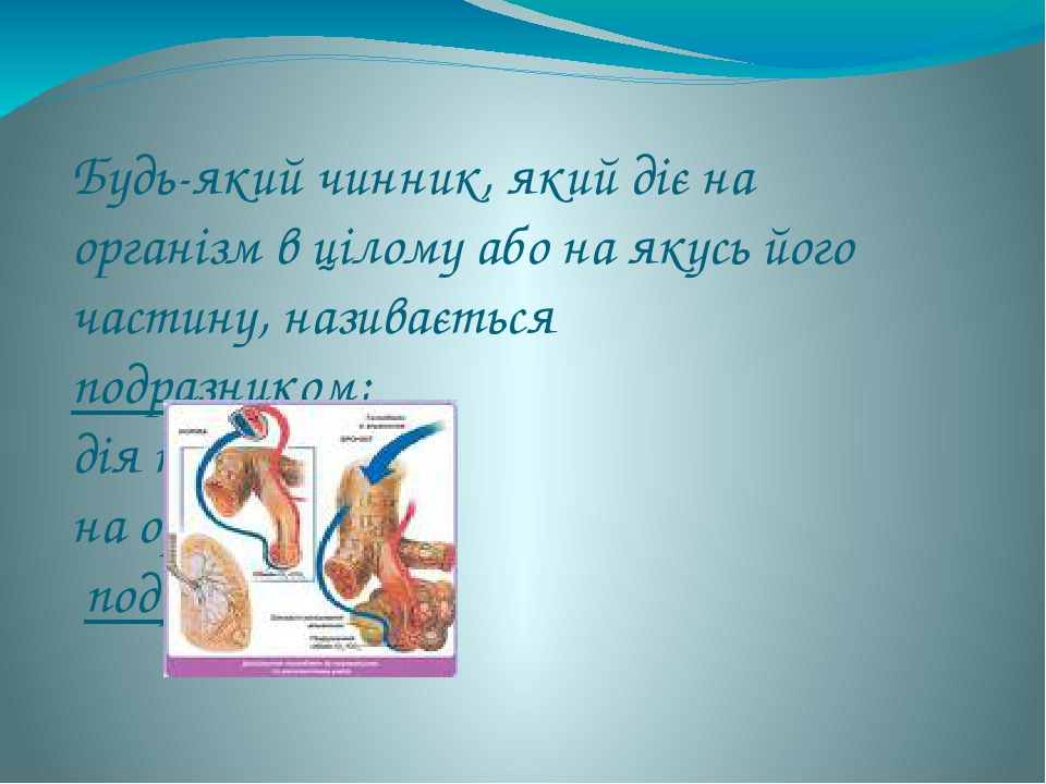 Будь-який чинник, який діє на організм в цілому або на якусь його частину, називається подразником; дія подразника на організм – подразненням.