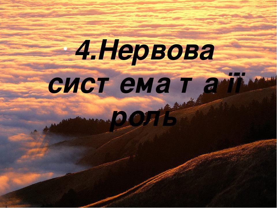 4.Нервова система та її роль