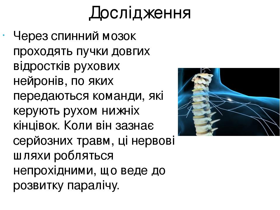 Дослідження Через спинний мозок проходять пучки довгих відростків рухових нейронів, по яких передаються команди, які керують рухом нижніх кінцівок....