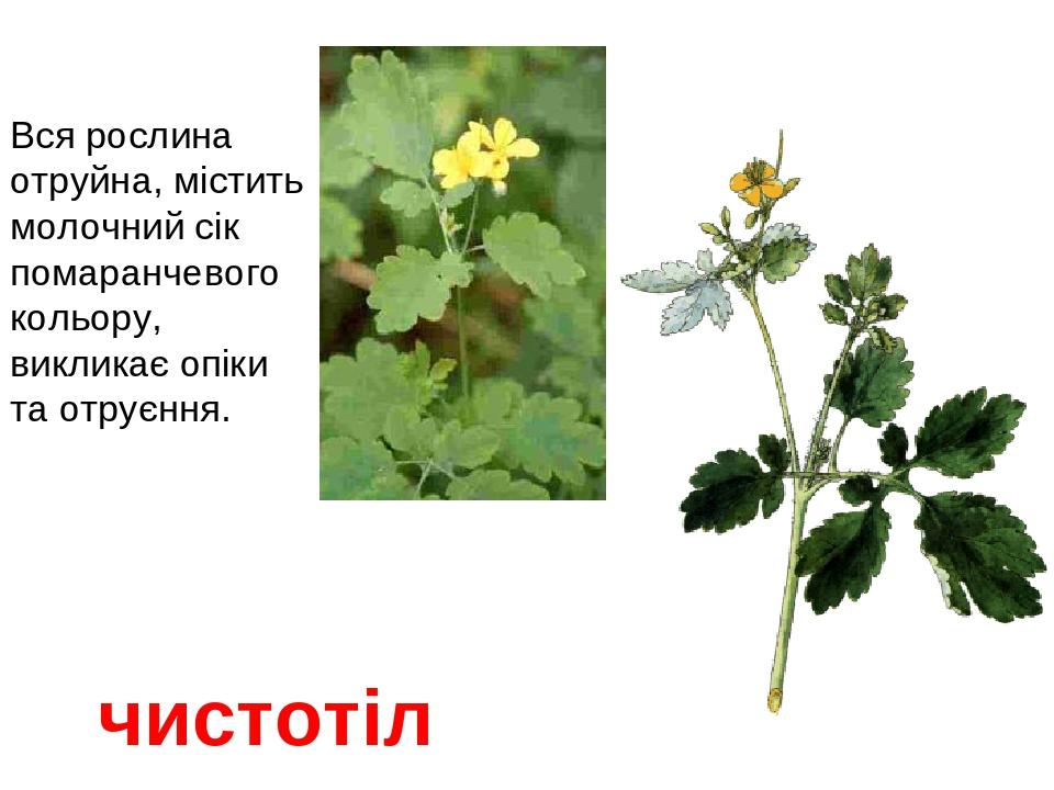 """Презентація """"Отруйні рослини"""""""