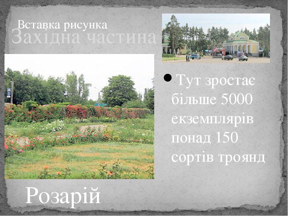 Західна частина Тут зростає більше 5000 екземплярів понад 150 сортівтроянд Розарій