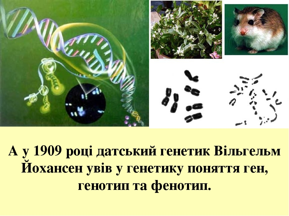А у 1909 році датський генетик Вільгельм Йохансен увів у генетику поняття ген, генотип та фенотип.