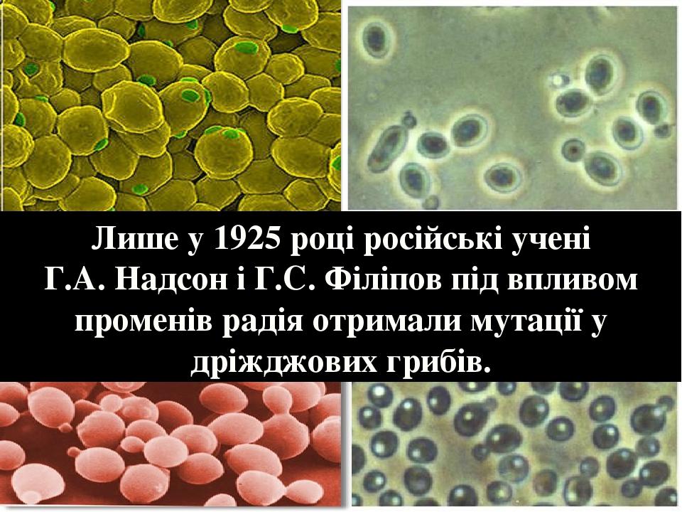 Лише у 1925 році російські учені Г.А. Надсон і Г.С. Філіпов під впливом променів радія отримали мутації у дріжджових грибів.