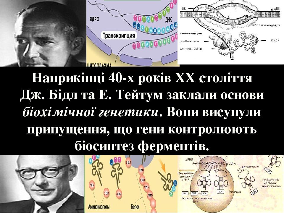 Наприкінці 40-х років ХХ століття Дж. Бідл та Е. Тейтум заклали основи біохімічної генетики. Вони висунули припущення, що гени контролюють біосинте...