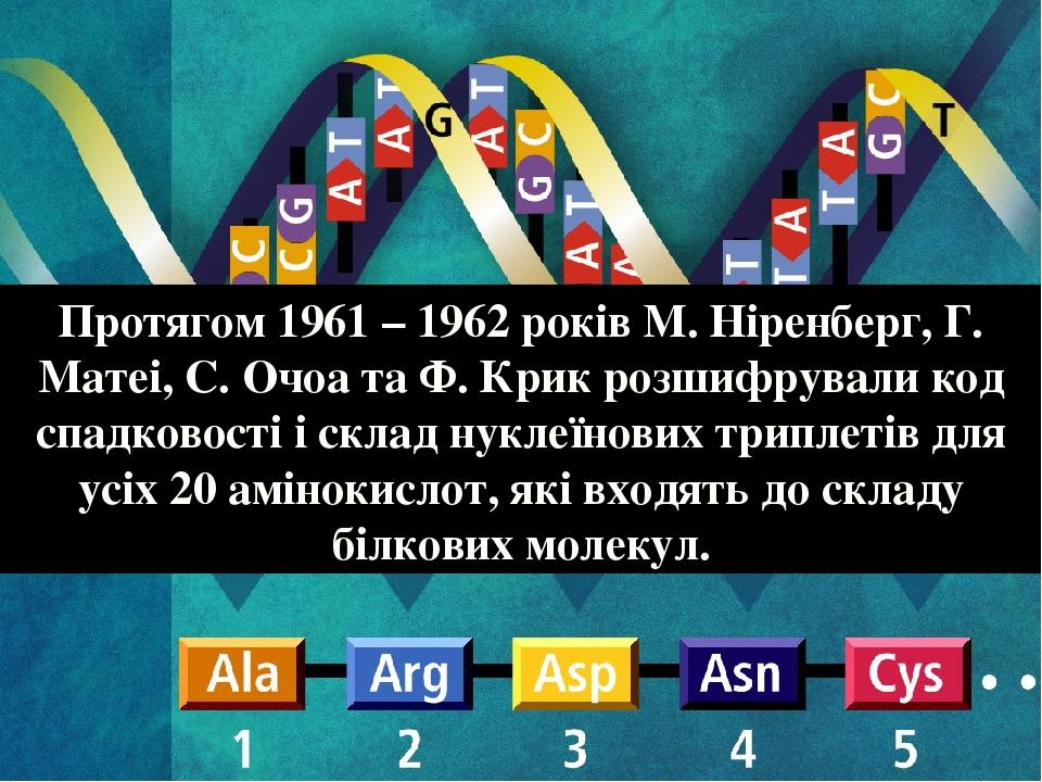 Протягом 1961 – 1962 років М. Ніренберг, Г. Матеі, С. Очоа та Ф. Крик розшифрували код спадковості і склад нуклеїнових триплетів для усіх 20 амінок...