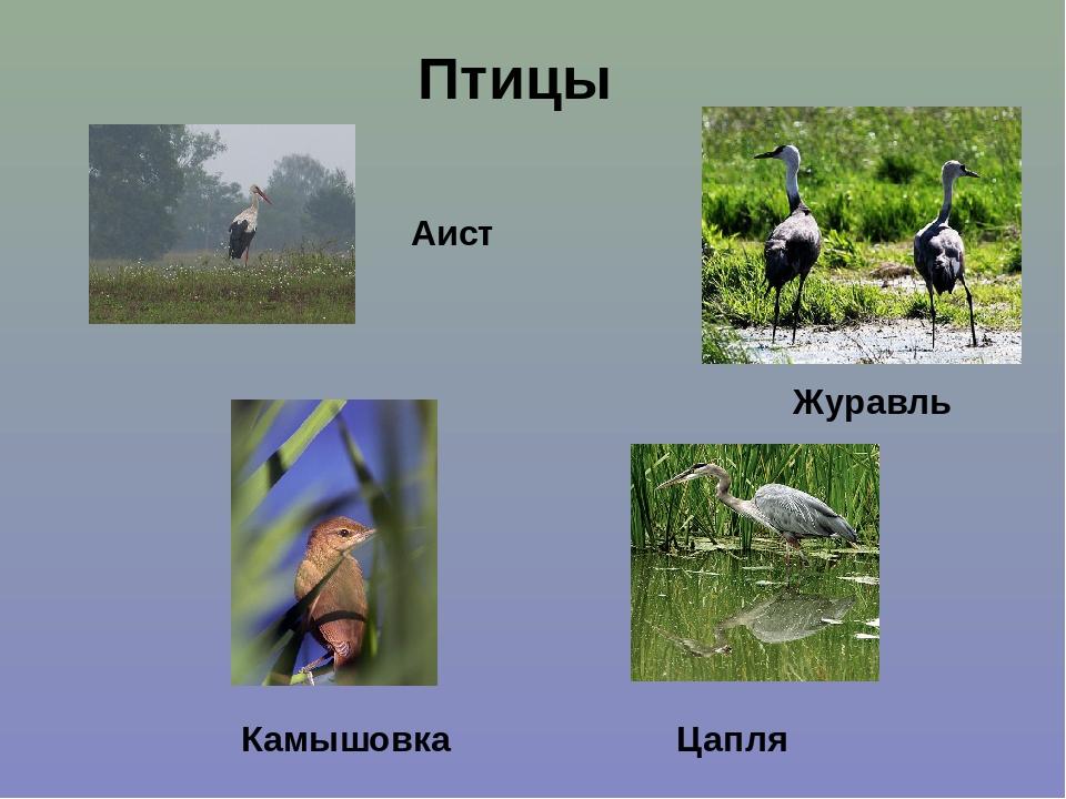 Картинки болота и его обитатели