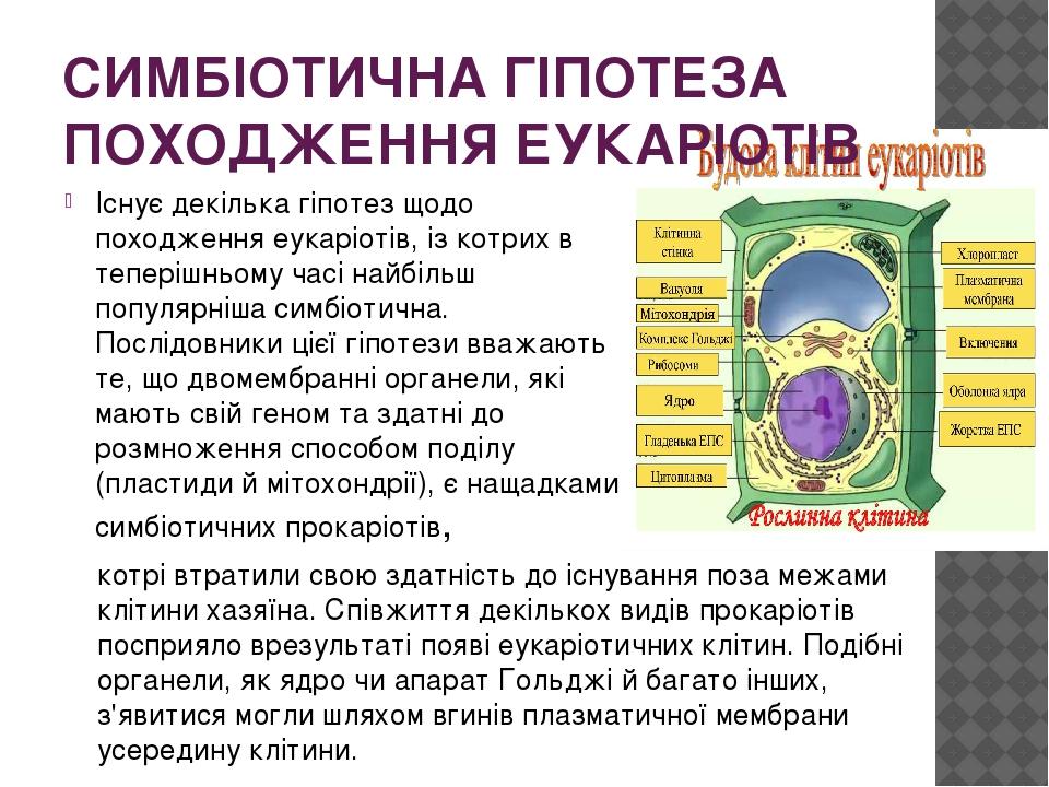 СИМБІОТИЧНА ГІПОТЕЗА ПОХОДЖЕННЯ ЕУКАРІОТІВ Існує декілька гіпотез щодо походження еукаріотів, із котрих в теперішньому часі найбільш популярніша си...