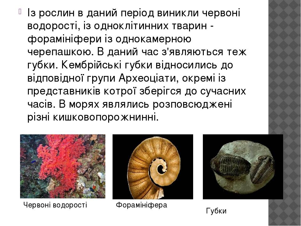 Із рослин в даний період виникли червоні водорості, із одноклітинних тварин - форамініфери із однокамерною черепашкою. В даний час з'являються теж ...