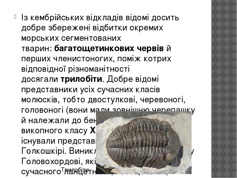 Із кембрійських відкладів відомі досить добре збережені відбитки окремих морських сегментованих тварин:багатощетинкових червівй перших членистоно...