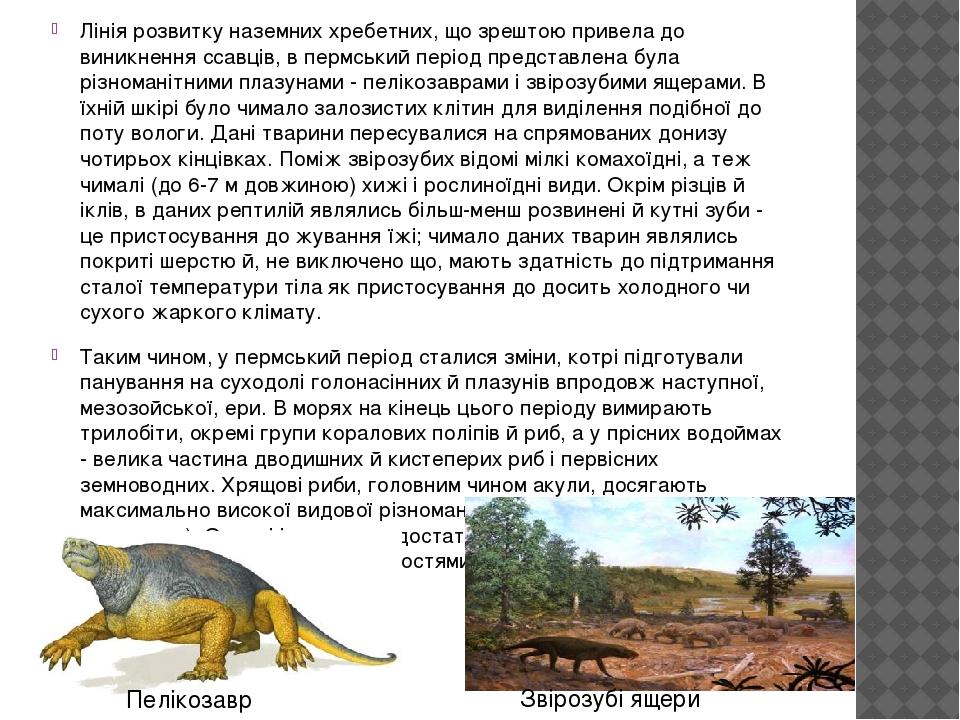 Лінія розвитку наземних хребетних, що зрештою привела до виникнення ссавців, в пермський період представлена була різноманітними плазунами - пеліко...