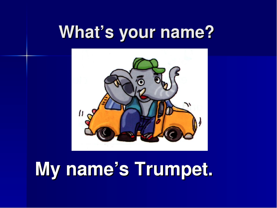 What's your name? My name's Trumpet.