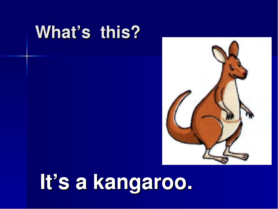 What's this? It's a kangaroo.