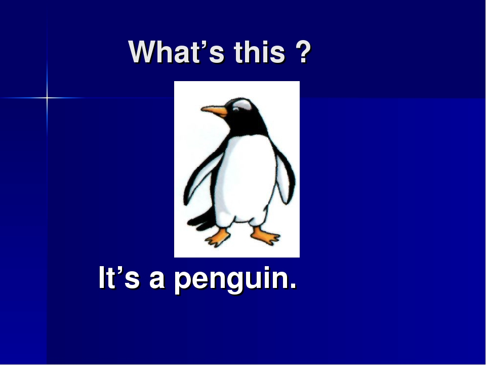 What's this ? It's a penguin.