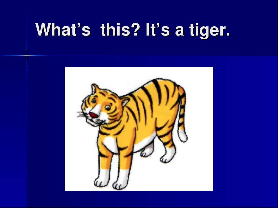 What's this? It's a tiger.