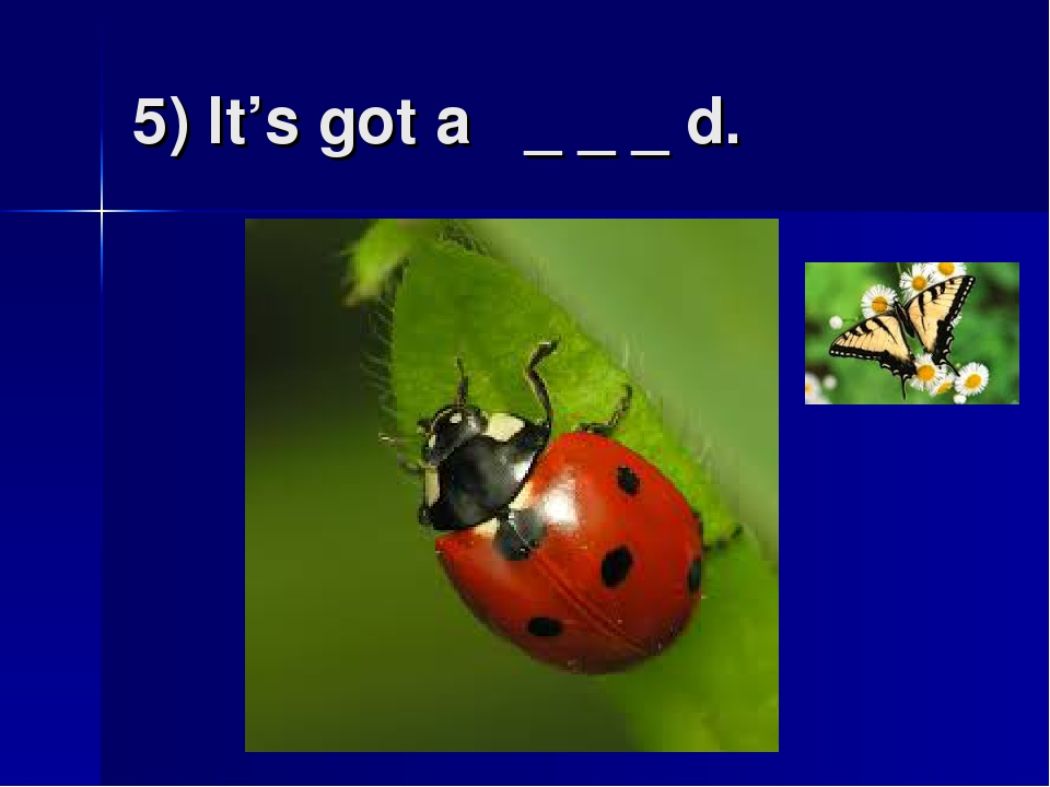 5) It's got a _ _ _ d.