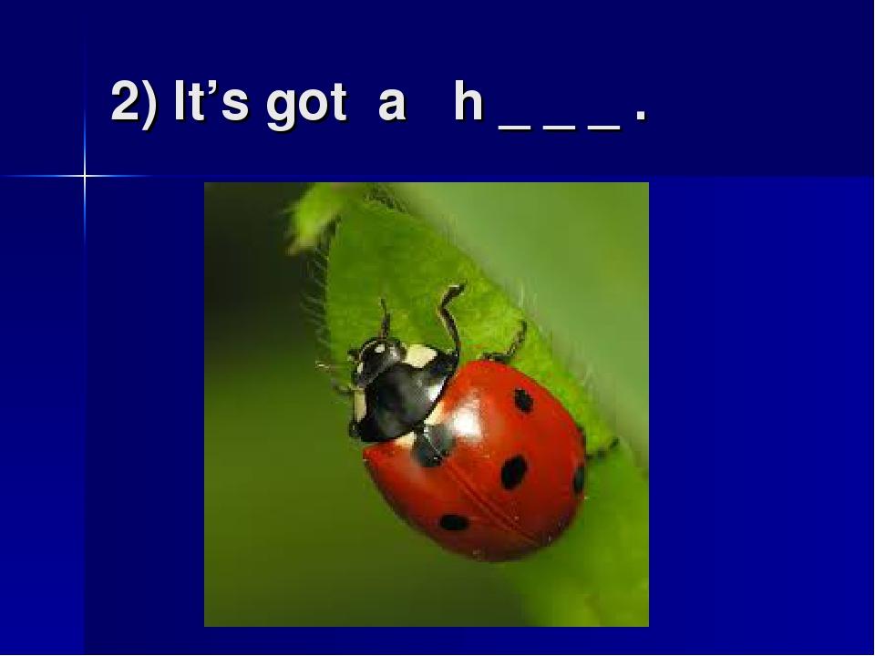 2) It's got a h _ _ _ .