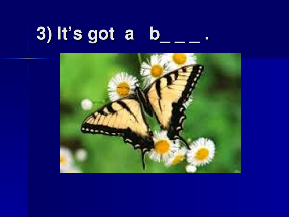 3) It's got a b_ _ _ .