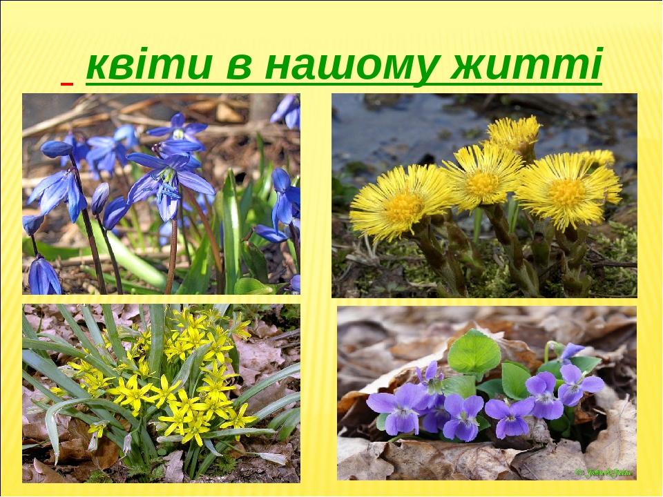квіти в нашому житті