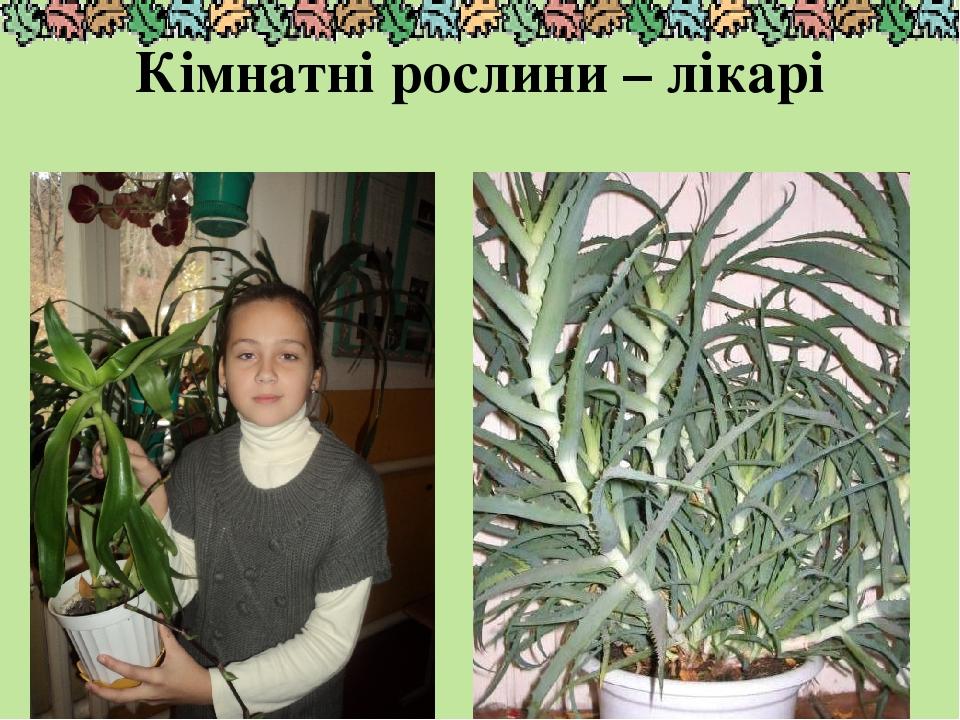 Кімнатні рослини – лікарі