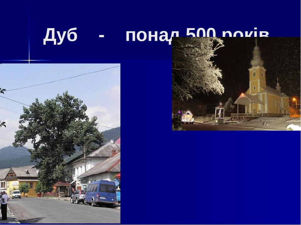 Дуб - понад 500 років